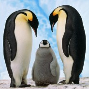Has Google Penguin 2.0 affected the SEO on your website?